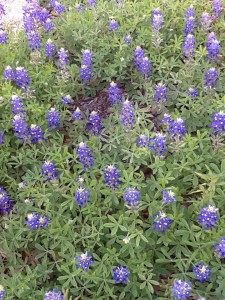 New Places to Try in Town among the Bluebonnets!